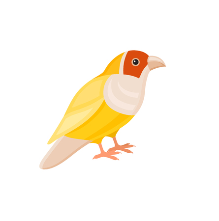 zoological: Bird with colorful feathers, isolated vector illustration.  Perfect cards or any other kind of design