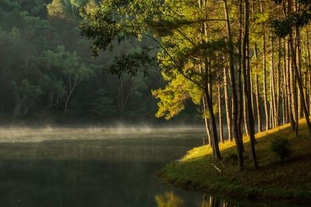 pang: pine of Pang Oung, Mae Hong Son, Thailand