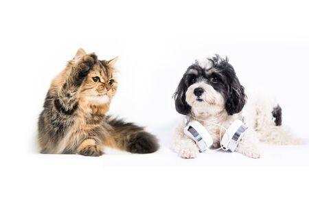 猫と犬の白い背景の前で一緒に