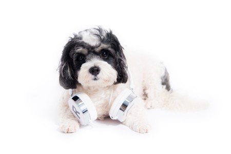 scamper: Dog with headphones isolated on white