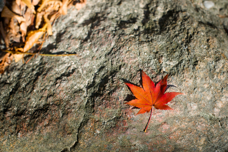 Red autumn maple leaf against rocky texture