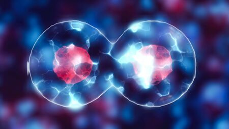 Dividing cell with nucleus in mitosis and multiplication of cells for beauty and biology Stock Photo