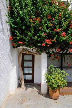 altea: Vintage door and blooming apple tree in Altea