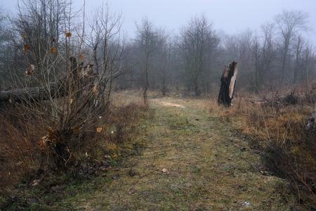 mornings: beauty mornings fog over the mystic forest