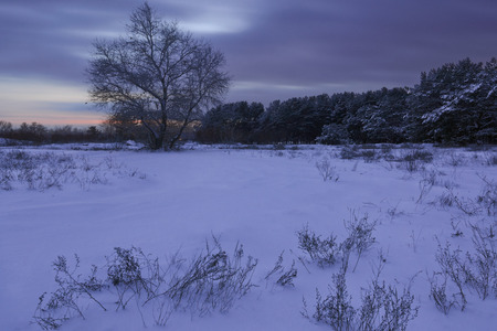 sheltered: beautiful winter forest sheltered snow at sunset Stock Photo
