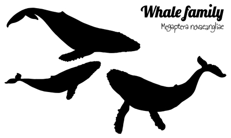The family of whales with their calf. Megaptera novaeangliae. Vector. Silhouette. Vettoriali