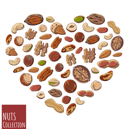 Group of vector colorful illustrations on the nutrition theme; set of different kinds of nuts. Realistic isolated objects for your design. Heart lined with nuts.