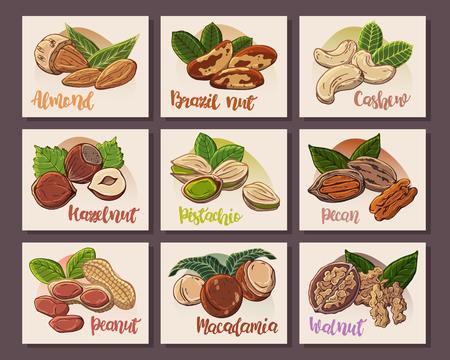Illustrations vectorielles colorées sur le thème de la nutrition ; ensemble de différents types de noix. Autocollants pour votre conception. Vecteurs