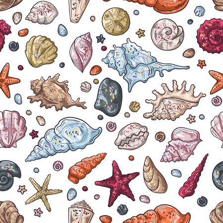 Vector sketching illustrations. Different types of seashells. Vectores