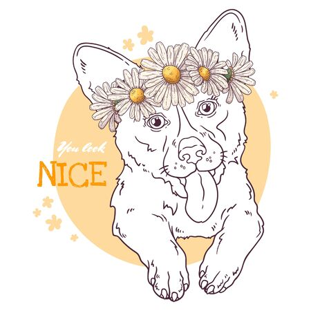 Vector sketching illustrations. Portrait of a cute corgi dog with daisies. Isolated objects for your design. Each object can be changed and moved.