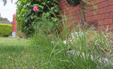 Overgrown lawn edge