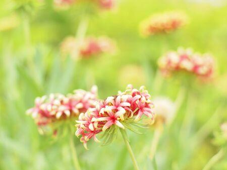 florae: Flower field