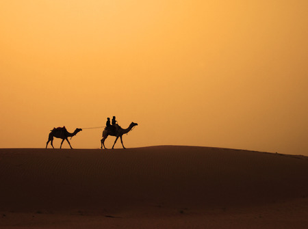 The camels are walking across the sand dune in Thar Desert, Jaisalmer, Rajasthan, India  photo