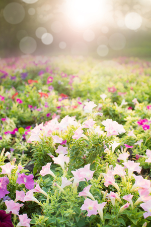 Summer background with lens flare photo