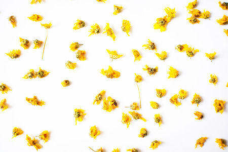 Dried chrysanthemum flowers scattering on white background