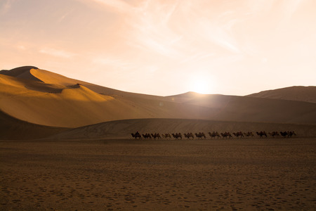 gobi: Camel caravan going through the sand dunes in the Gobi Desert, China Stock Photo