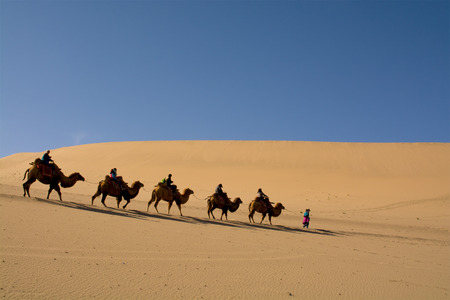 Camel caravan going through the sand dunes in the Gobi Desert China Stock Photo