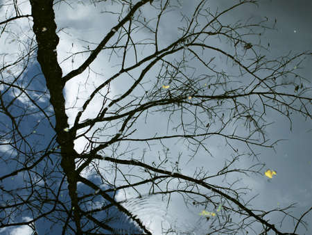 Reflections of branch trees and clouds in water Stock Photo