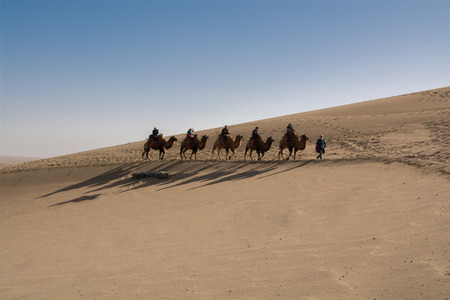sand dune: Camels walking across the sand dune, Dunhuang, China
