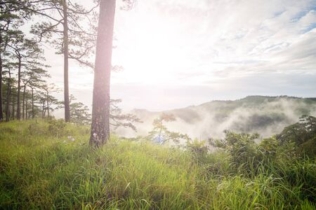 medow: Photo of meadow and pine forest has been taken before sunset Stock Photo