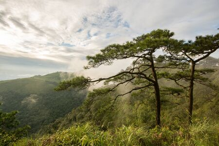 medow: Photo of pine trees on the mountains whith fog has been taken before sunset Stock Photo