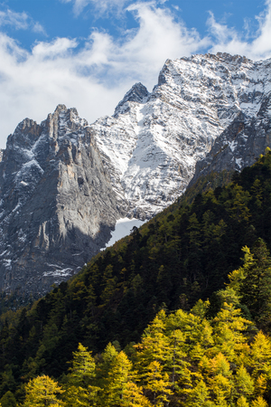 sichuan province: Mountain peak and pine forest, Yading national level reserve, Daocheng, Sichuan Province, China.