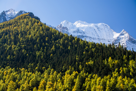 alpenglow: Mountain with snow and pine forest in autumn, taken in the evening, Yading, Sichuan, China