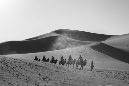 Dunhuang,Gansu, China - October 11, 2014: Group of tourists are riding camels in the desert at Dunhuang City , China. This place is a part of silk road in the history.