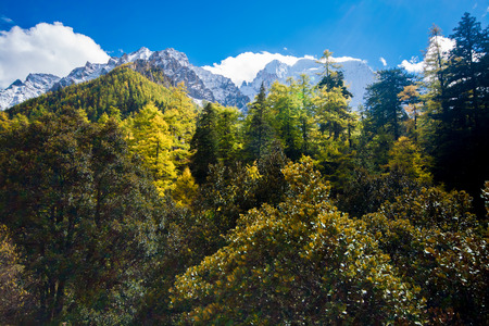 alpenglow: Mountain with snow and pine forest in a sunshine day of autumn, Yading, Sichuan, China Stock Photo