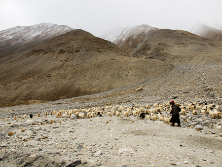 herdsman: Ladakh, India - April 10, 2012: An Ladakhi herdsman and goats walking on foot of the hills on April 10, 2012 in Ladakh, India