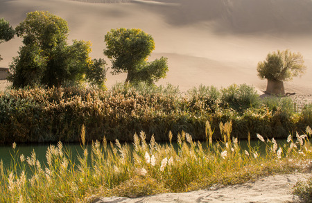 oasis: Oasis in desert at Mingsha Shan, Dunhuang, Gansu Province, China