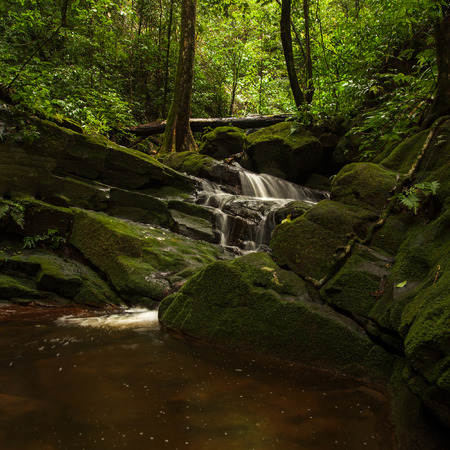 rill: small waterfall in the rainforest