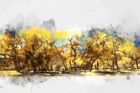 arbol alamo: Árbol de álamo en otoño Foto de archivo