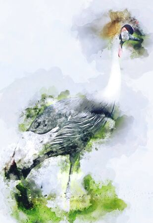 Watercolor image of Crowned crane, African crane with a yellowish bristly crest, digital illustration Imagens