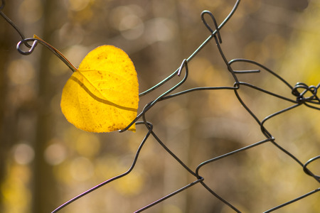 Yellow leaf hanging on grate in autumn