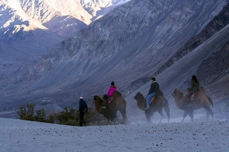 Ladakh, India - October 17, 2017: Tourists were riding camel, they were walking on sand dune, there are mountains at background on October 17, 2017 in Ladakh, India