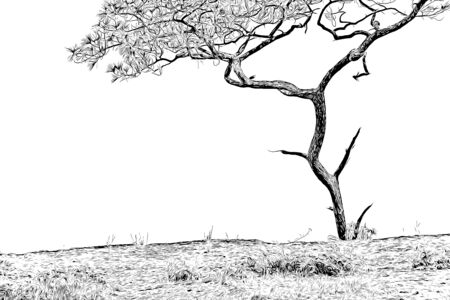 Digital drawing of pine tree in black and white color on white background