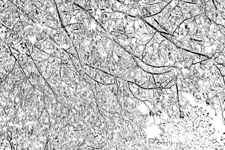 Digital drawing of tree branches in black and white color on white background