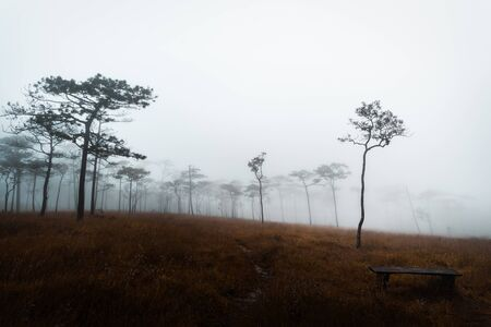 Grass field with pine trees and fog in Phu Soi Dao National Park, Thailand Фото со стока