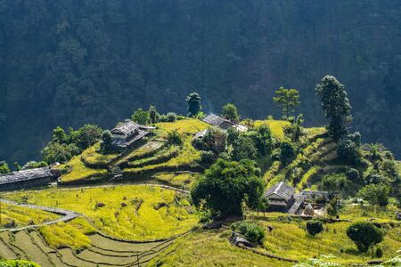 Rice field with houses on hill, Annapurna Conservation Area, Nepal Stock fotó