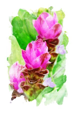 Watercolor painting of pink flowers with green leaves on white background Stock Photo