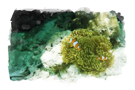 Watercolor painting of anemonefish with anemone under sea water, art illustration of aquatic animals