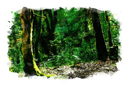 Watercolor painting of rain forest in green tone, art illustration Stock Photo