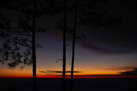 Pine trees in the morning, Phu Kradueng National Park, Thailand