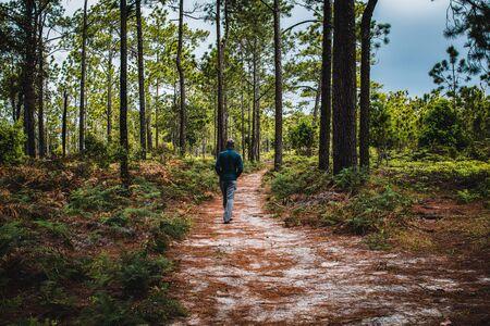 Man walking on path in pine forest, Phu Kradueng National Park, Thailand