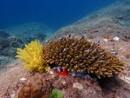 Fish and corals under blue sea, diving activity, underwater photography