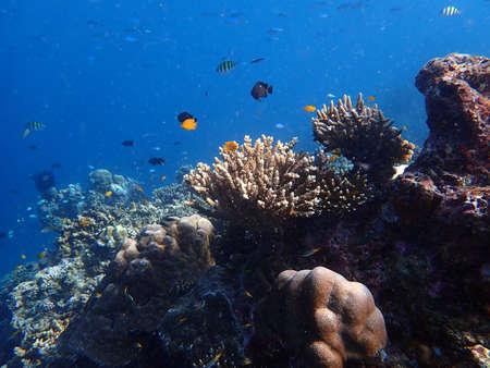 Sea fish with corals in sea, underwater landscape with sea life, blue sea water Foto de archivo
