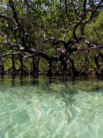 Mangrove and sea water, landscape photography