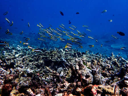 Sea fish with corals in sea, underwater landscape with sea life, underwater photography Foto de archivo
