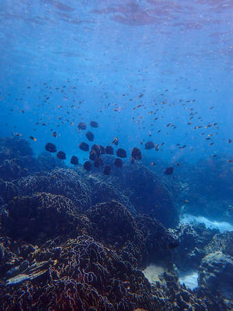 Sea fish with corals in sea, underwater landscape with sea life Foto de archivo